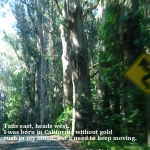 blurry roadside with trees