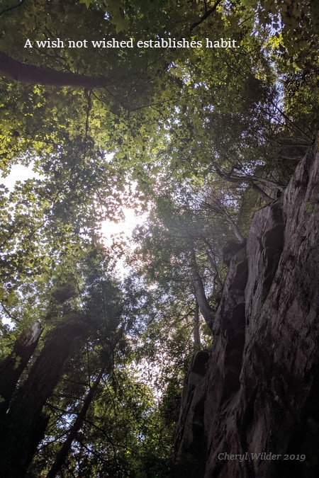 looking up between a high canopy of trees and a rock face to a sunny clearing