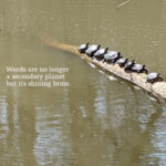 row of turtles sunbathing on log in river